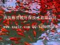 景观鱼池水处理设备 (30)