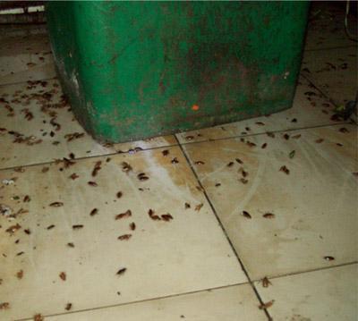 南昌灭鼠公司 南昌嘉事洁杀虫公司 专业灭蟑螂 经验丰富-- 南昌市嘉事洁病虫害防治有限公司