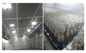 大棚蔬菜喷雾降温系统设备效果-- 深圳通宝环境技术有限公司