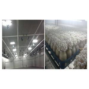 大棚蔬菜喷雾降温系统设备效果
