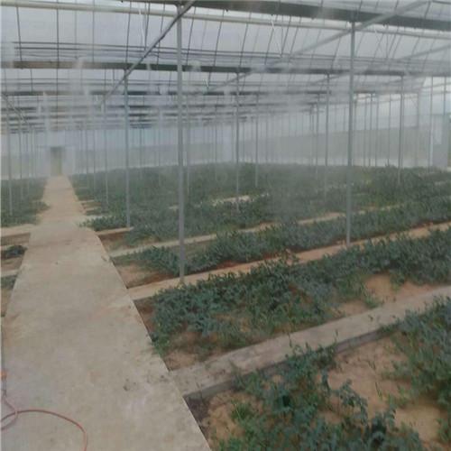 花卉苗圃种植自动喷雾加湿系统工程-- 深圳市通宝环境技术有限公司